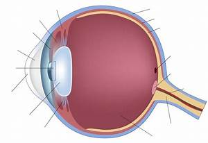 Diagram Of The Eyeball Labeled