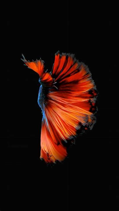 Iphone Fish 6s Wallpapers Zedge Backgrounds Android