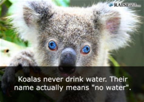 Weird animal facts
