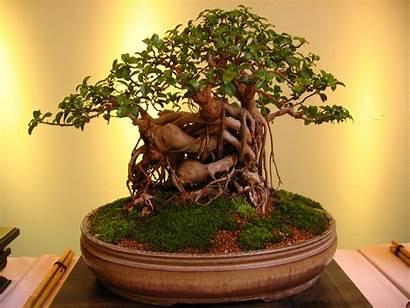 Bonsai Tree Things Growing Plants Grow Avoid