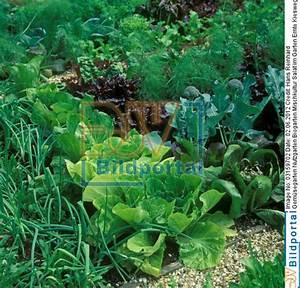 Mischkultur Im Garten : details zu 0003159702 gem segarten nutzgarten biogarten mischkultur salat im garten ernte ~ Orissabook.com Haus und Dekorationen