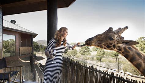 giraffe treehouses jamala wildlife lodge
