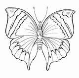 Butterfly Coloring Spring Pages Butterflies Animals sketch template