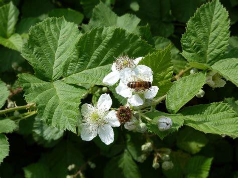 fotos gratis flor fruta comida verde produce flora