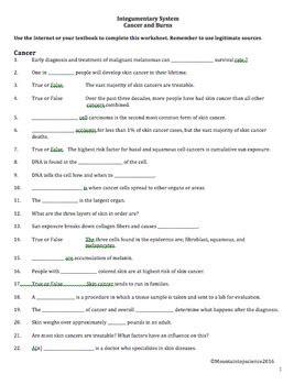 integumentary system worksheet anatomy  cancer