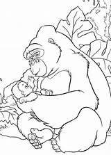 Gorilla Coloring Pages Baby Kong King Da Cute Tarzan Disney Colorare Popular Colorings Getdrawings Kerchak Con Animal Salvato Coloringhome sketch template