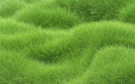 a green with gold grass texture wallpaper hd grass texture