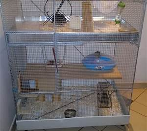 Degu setup | degu cage build | Pinterest