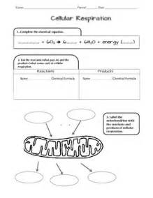 Cell Respiration Ngss Scaffolded Worksheet By D Meister Tpt