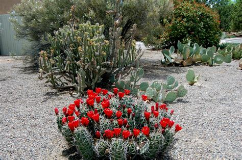 Xeric Gardens