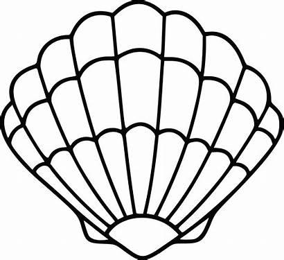 Shell Sea Scallop Clipart