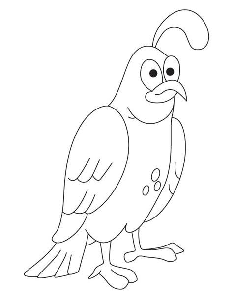 quail coloring page preschool coloring pages