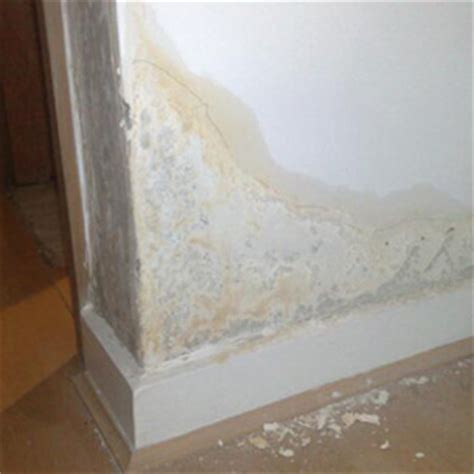 anti condensation paint anti damp product guide