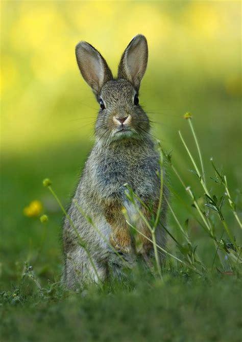 cuisiner le lapin de garenne les 186 meilleures images du tableau sologne sur