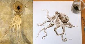 An Octopus Painted With 95-Million-Year-Old Ink   Colossal