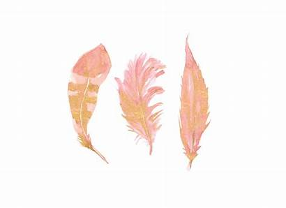 Feather Blush Gold Watercolor Pink Clipart Separate