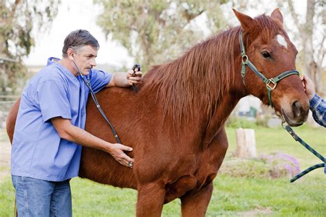horse rate respiratory sick veterinarian horses equine syndrome veterinary wobblers examining career profile