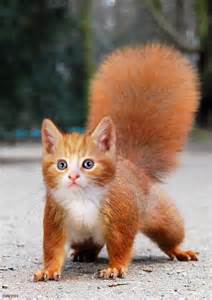 for cats to squirrels 66 best images about combined hybrid animals on