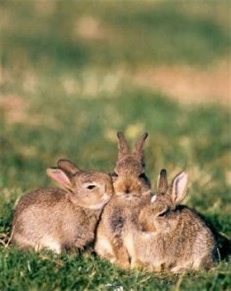 cuisiner le lapin de garenne le lapin de garenne de passioncynegetique