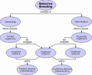 Intelligent Selection  Aka Artificial Selection And