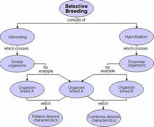 Selective Breeding Flowchart