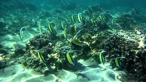 ecran de veille poissons