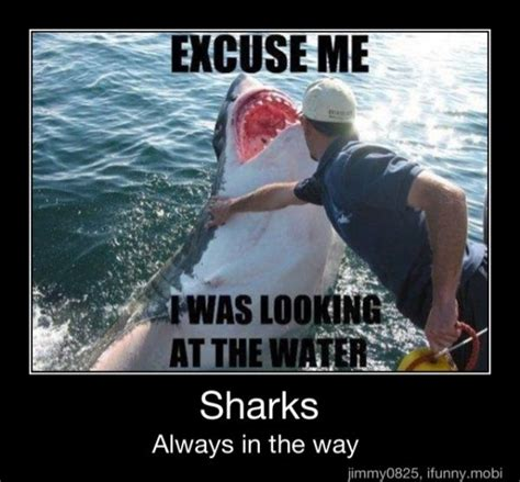 Rude Finger Meme - sharks always in the way lol pinterest how rude awesome and sharks