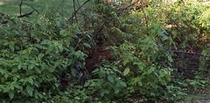 Niedrig Wachsende Hecke : die benjeshecke r ckzugsort nahrungsdepot wanderweg ~ Lizthompson.info Haus und Dekorationen