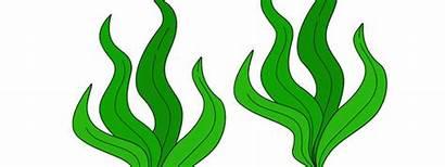 Seaweed Cut