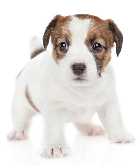 Small Dog Names  350 Ideas For Naming Your Little Puppy. Daybeds For Living Room. Tiles For Living Room Walls. Brown Sectional Living Room. Living Room And Dining Room. Mirrored Cabinet Living Room. Tall Living Room Lamps. Living Room In Grey. Cheap Living Room