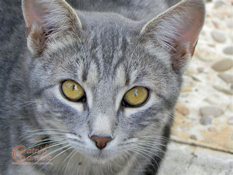 Name Ideas For Cats With Grey