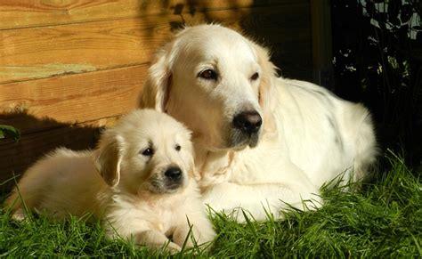 vermifuge pour chien et chiot pourquoi vermifuger animal