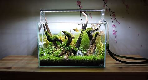 video ray motoyamas mini forest     planted