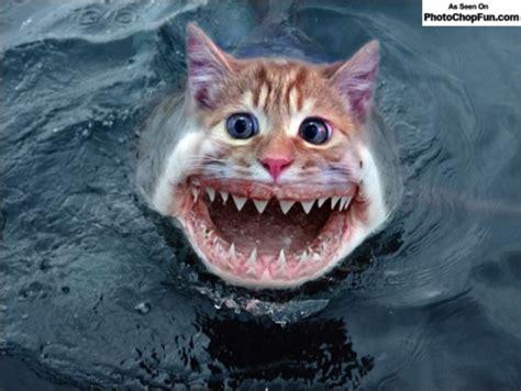 cat shark cat shark kciccolella