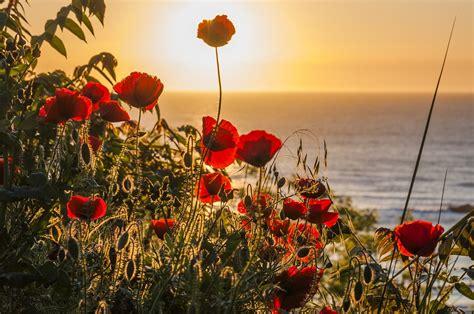 bloemen zon gratis foto op pixabay