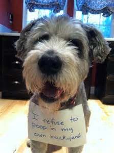 Funny Dogs Schnauzers Memes