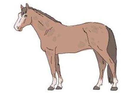 draw horse step  step easy drawings  kids