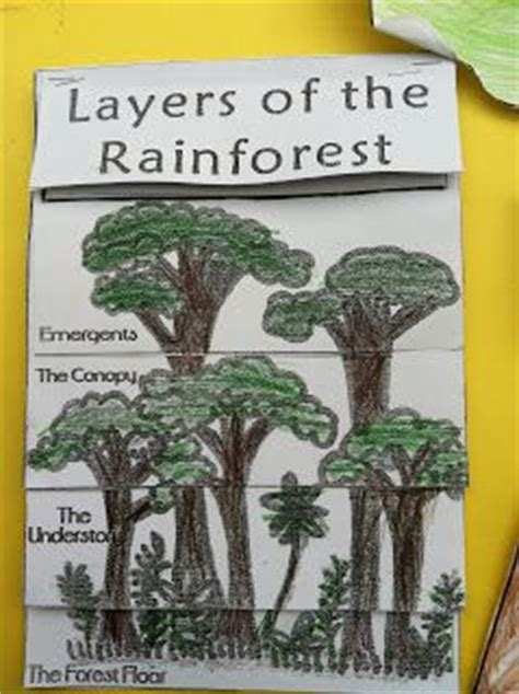 rainforest craft ideas for beans the great kapok tree lapbook project 7086