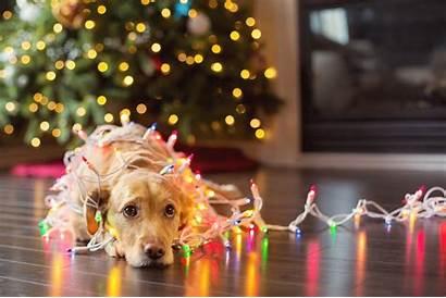 Christmas Dog Lights Pet Safety Tree Pets