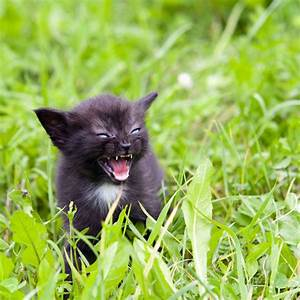 world rabies day cats viral infection cat health vaccinations
