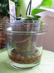 Cache Pot Orchidée : orchidee pot verre ~ Teatrodelosmanantiales.com Idées de Décoration