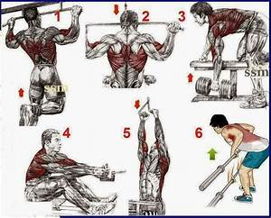 Fitness  U0026 Bodybuilding  This A Simple Exercises For The Begining U0026 39 S Bodybuilding