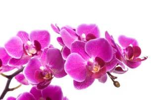 Résultat d'images pour orchidée