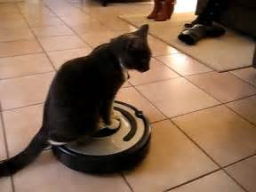 cat on roomba the cat rides the roomba