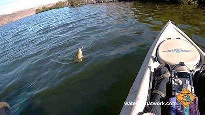 Bass Fishing Watermanatwork Smallmouth Kayak Keeps Bigger
