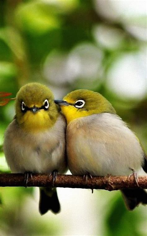 最可爱的鸟图片(3)_伊卟图库