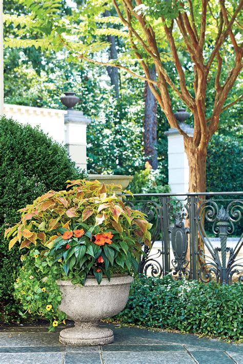shady ladies containers  covered porches southern living