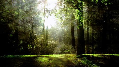 magical forest background loop motion background