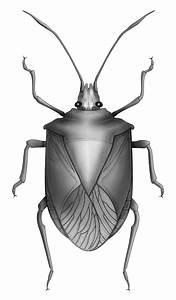 What Do True Bugs Look Like