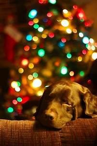 Best 25 Dog christmas cards ideas on Pinterest